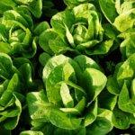 Politica agricola Ue, primo accordo: 20% dei fondi alle attività green