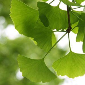 21 novembre: un libro per la Giornata Nazionale degli alberi