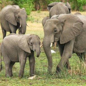 L'elefante ha una personalità giuridica? Il dilemma della Corte Suprema di New York