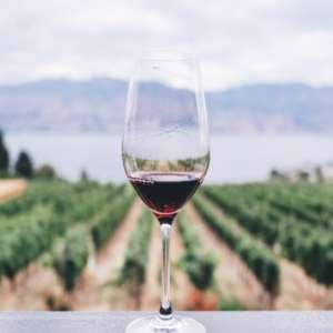 Covid: c'è poco da bere, e l'export del vino cala per la prima volta in 30 anni