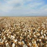 Albini lancia Biofusion, il cotone tracciabile