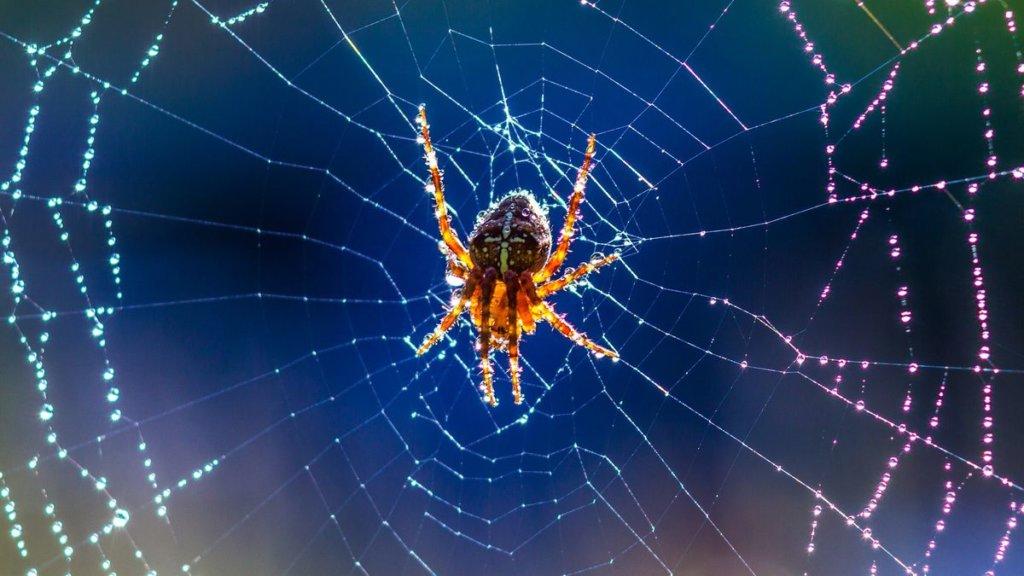 Ragno dentro la ragnatela