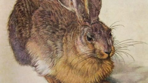 "Albrecht Dürer, la sua storia e il suo ""leprotto"""