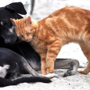 Adottiamo un cane e un gatto: le cose da sapere