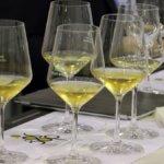 Vino: per il Verdicchio un'annata d'oro, exploit dell'imbottigliato