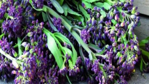 Chiacchietegli, il saporito broccoletto viola recuperato dall'estinzione