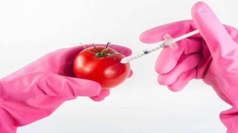Agroalimentare: nel dopo Brexit si riaffacciano gli OGM
