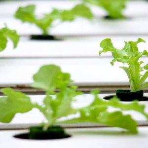 Agroalimentare: fattorie verticali nuovi scenari sostenibili