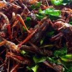 Insetti: il cibo del passato, un'alternativa sostenibile per il futuro