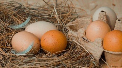 Uova: le migliori d'Italia da galline felici