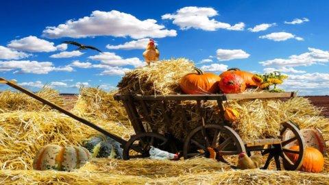 Agroalimentare: La Puglia test per una ripresa sostenibile post Covid.