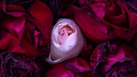 """""""Se la morte fosse un fiore profumato"""" il nuovo libro di Chiara Saccavini"""