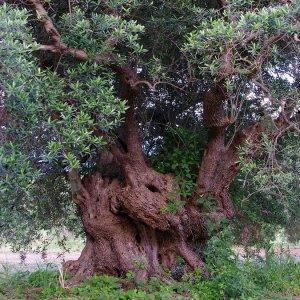 L'Olio fa turismo: nasce il movimento di promozione dell'olivicoltura