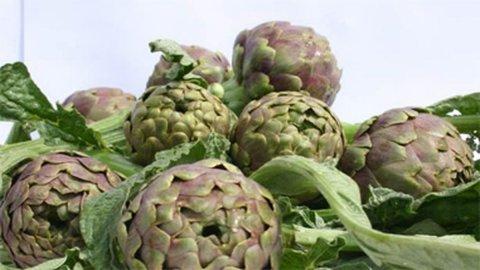 Carciofo di Paestum IPG, precoce e versatile, annuncia la primavera in cucina