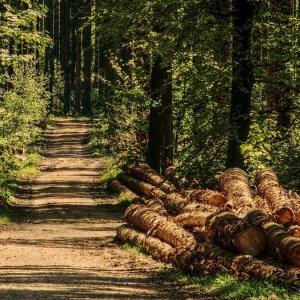 Produrre energia dal legno di scarto: quanto valgono le foreste