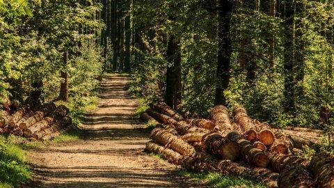 Rame, alluminio, ora anche legno: la ripresa spinge i prezzi