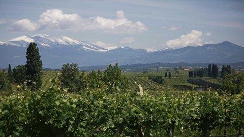 Movimenti nel mondo del vino: nasce Cantina di Verona gruppo da 65 milioni