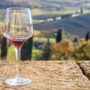 Leonardo, torna in vita il vino che produceva nella vigna di Milano