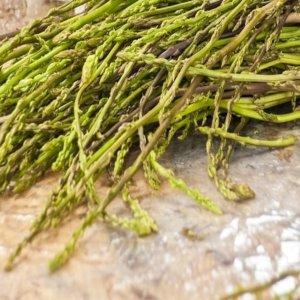 Si ritorna a vivere, è il momento di raccogliere asparagi selvatici nei boschi