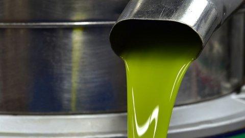 Olio: i migliori Extravergine d'Italia scelti dalla Guida di Bibenda