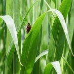 Politica agricola europea, l'Italia pensa alla sostenibilità