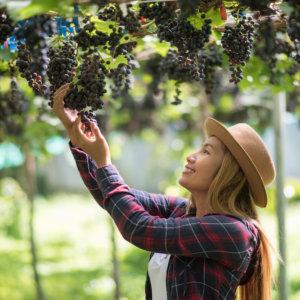 Vino, food, agricoltura: i giovani motore della ripartenza