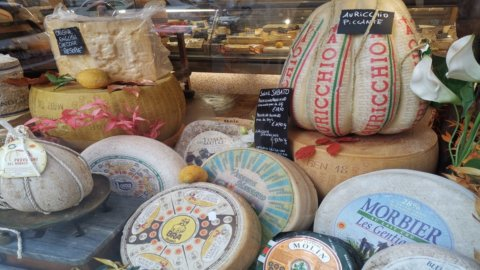 Latticini e formaggi: contrordine, contengono sostanze utili contro il colesterolo