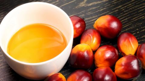 Commodity, olio di palma: il prezzo segna un nuovo record