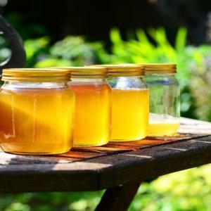 Giornata mondiale delle api: aumentano in Italia ma producono meno miele