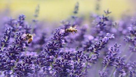 Giornata mondiale api: tre alveari sugli edifici Enel a Tor di Quinto per monitorare l'ambiente