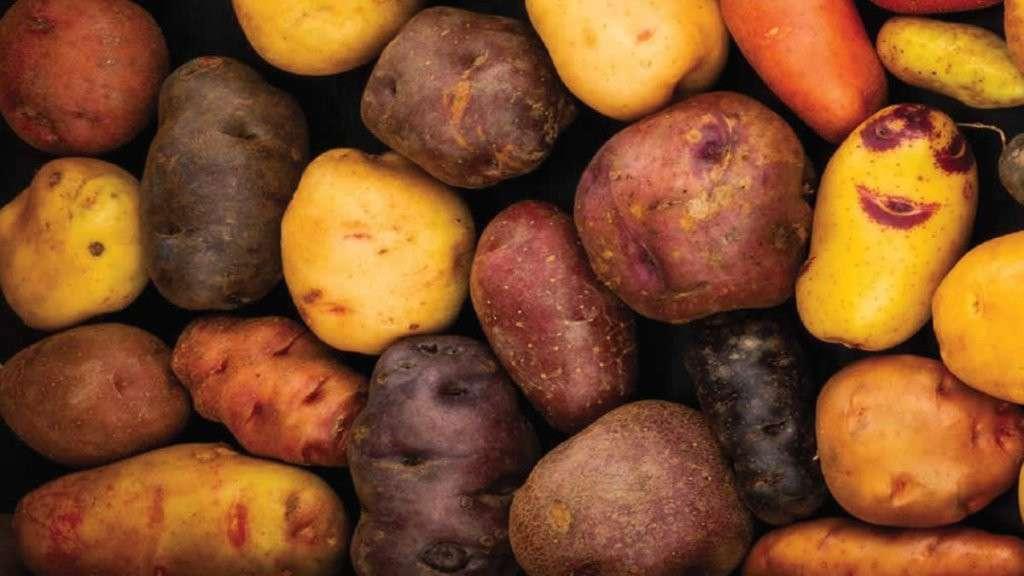 Antiche patate delle alpi