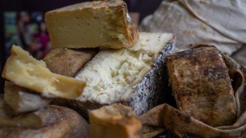 Riparte Cheese: tutti a Bra a settembre per i formaggi top di gamma