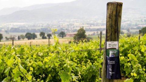 Cantine Aperte: 235 aziende aprono al turismo del vino in tutta Italia