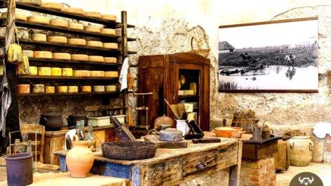Un Museo della mozzarella a Battipaglia per raccontare il mondo delle bufale e degli uomini