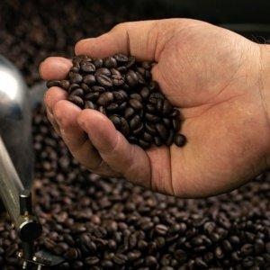 Caffè: ad  Aprilia apre Specialty Academy,  centro di formazione per professionisti