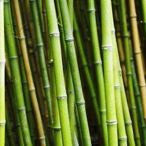 Design: Concorso Internazionale per la progettazione e realizzazione di un oggetto innovativo in bambù