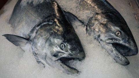Slow Fish: pesce in scatola e surgelato, aumentata la spesa ma anche i pericoli