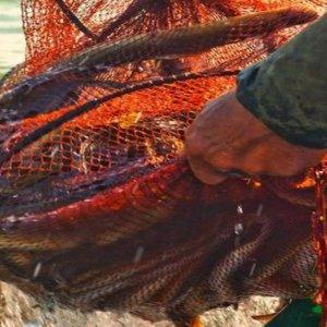 SOS per la laguna di Orbetello: le alghe che si sviluppano col caldo soffocano i pesci