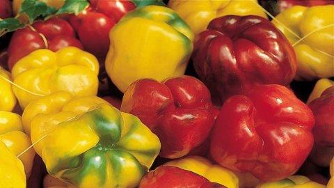 Il peperone quadrato di Costigliole da cui è nata l'ecogastronomia è Presidio Slow Food
