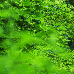 Nuovi boschi urbani: progetto Arbolia e Commissario Unico bonifica discariche