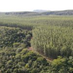 Carbon Angels investe nella Carbon Credits Consulting