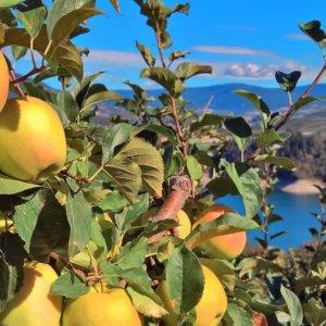 Distretti, export oltre il pre-Covid: in vetta mobili e mele del Trentino