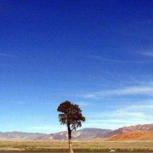 Mongolia, prima fabbrica di autoveicoli