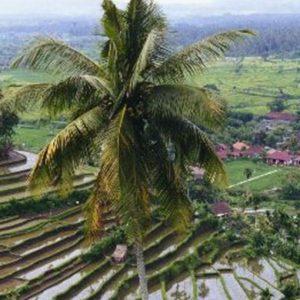 L'opposizione thailandese è a caccia di voti. Bangkok dovrà dire addio al primato del riso?