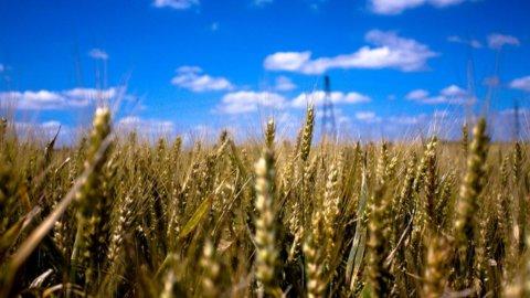 """L'aumento dei prezzi dei generi alimentari è strutturale. E la """"colpa"""" è del boom degli emergenti"""