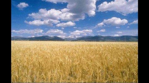 Un derivato per proteggersi dalla volatilità dei prezzi alimentari