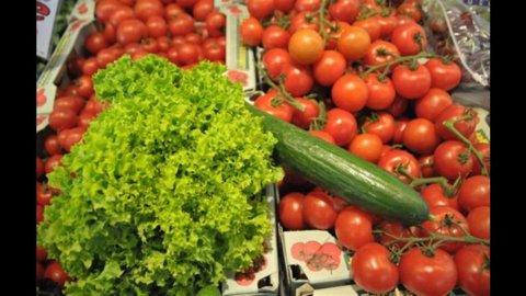 Agricoltura, Coldiretti: nel 2011 il Pil cresce dell'1,2%, occupazione +6%
