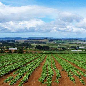 Al Senato ddl per favorire l'occupazione dei giovani nel settore agricolo