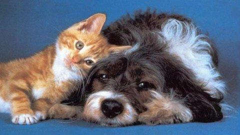 """Assicurazioni """"istantanee"""" in crescita: da cani e gatti a car sharing e sci"""