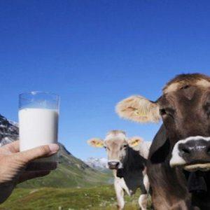 Italia bacchettata dall'Ue per le quote latte e per la spazzatura